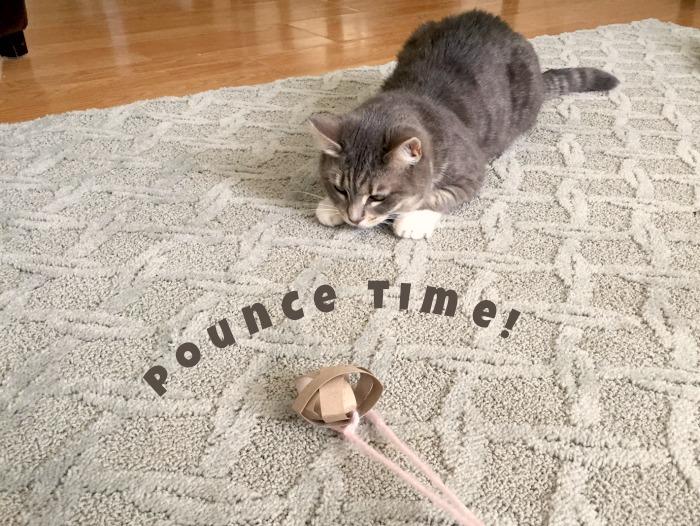 pounce time!