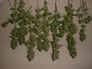 Kick back and let your bud dry