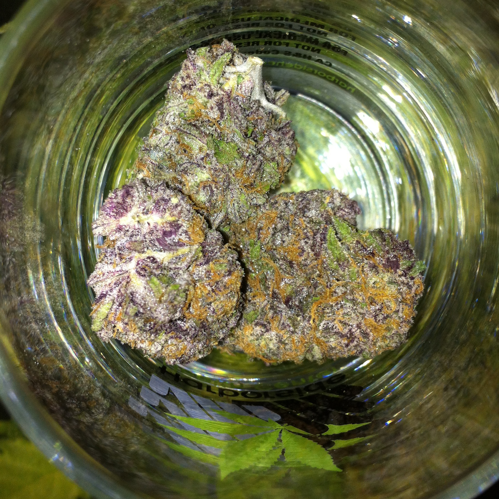Grandy Daddy Purple