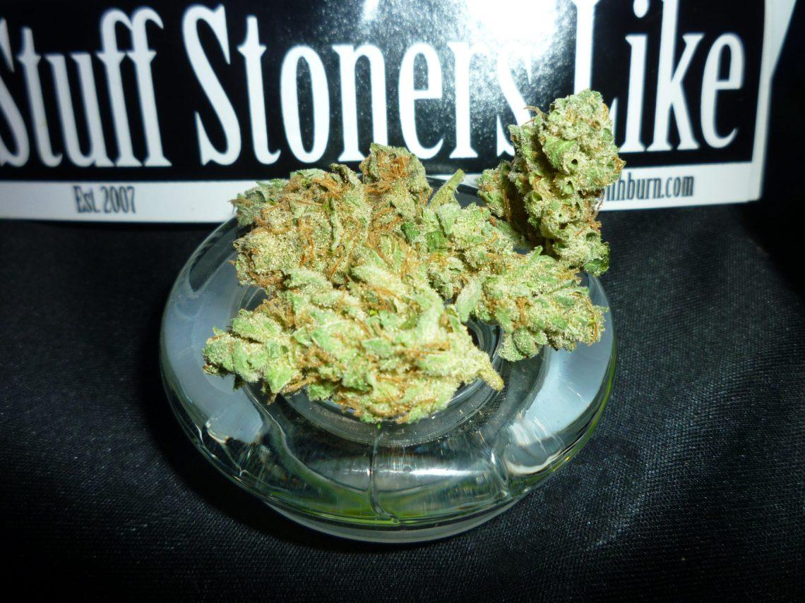 3 Star Dawg Marijuana Strain from the Harborside Health Center in San Jose California
