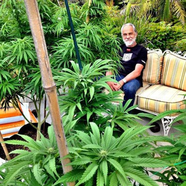 Tommy Chong Grows Weed
