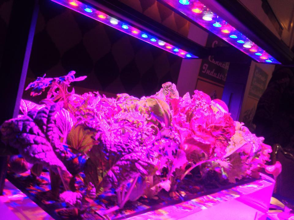 experts best for growing under led light by lights grow in lighting reviews plant