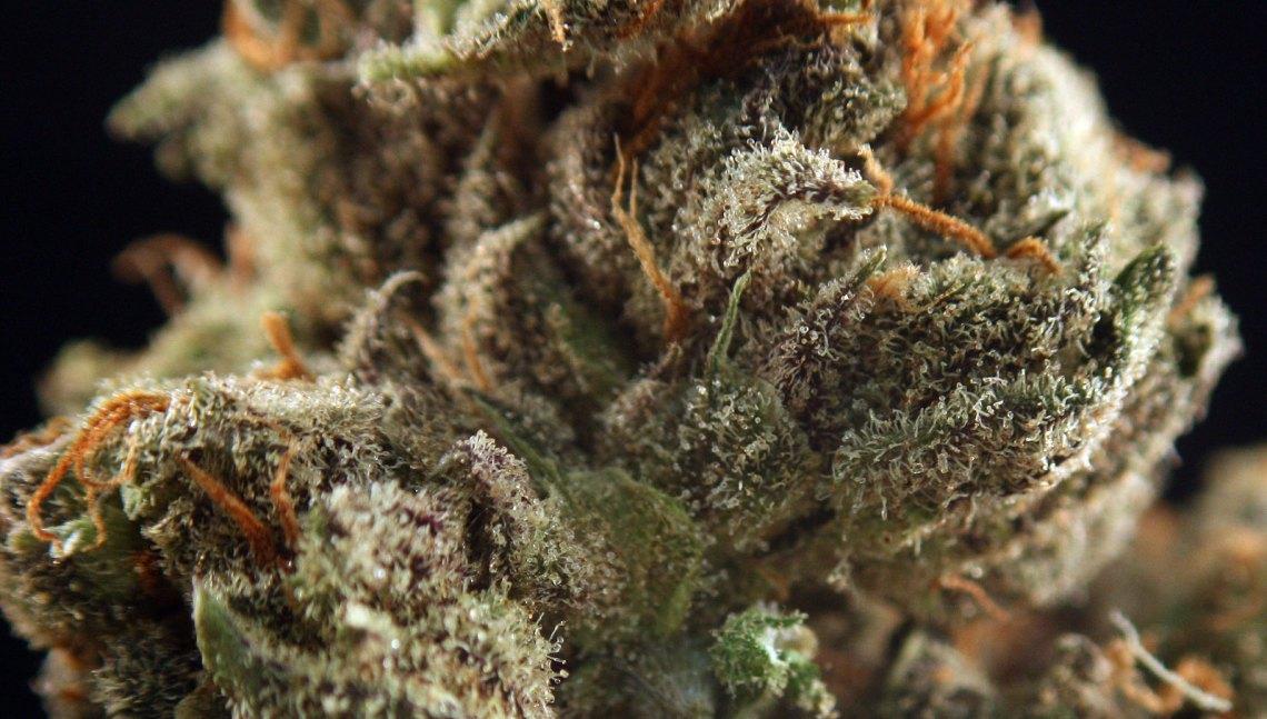 LSD weed strain