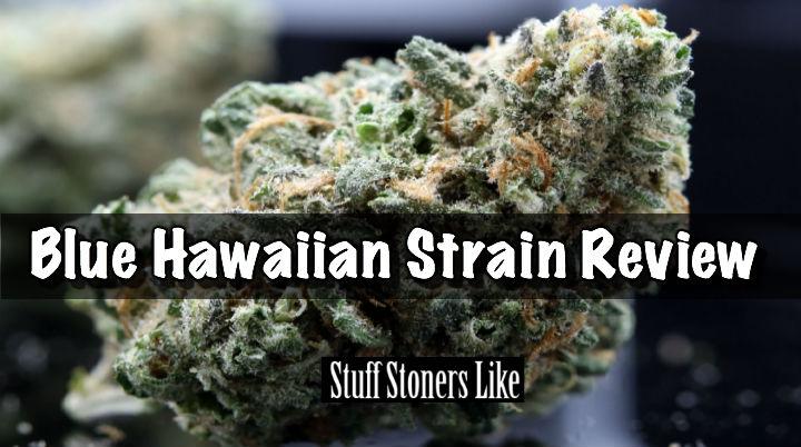 Blue Hawaiian Strain Review