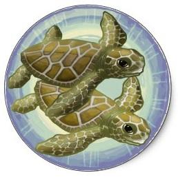 two turtles swimming around