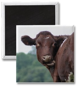 Brown Cow fridge magnet photo