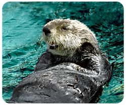Sea Otter Photo Mousepad