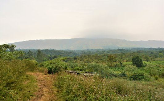mt-cameroon-upper-farms