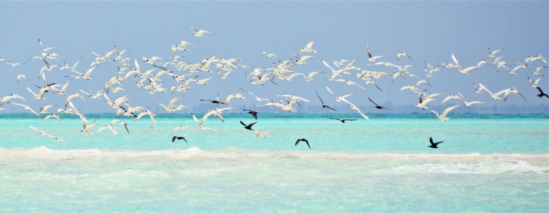 Mnemba-Island-Zanzibar-Birds-Stu-Jarvis.com