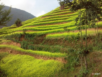 The next morning - surrounded by terraced fields of buckwheat