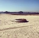 Ocean Springs Beach