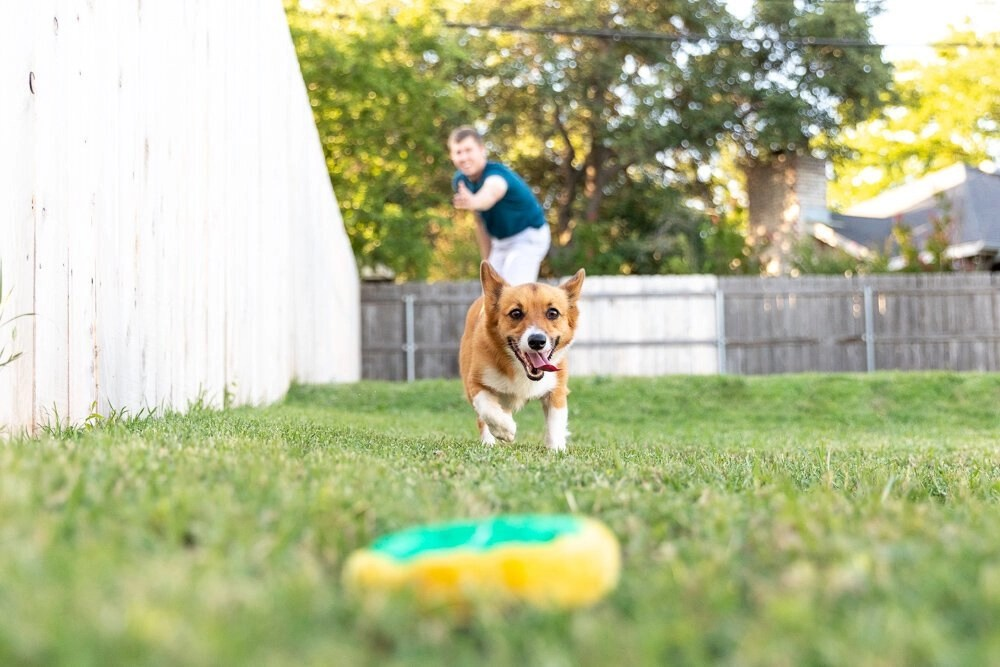 How Much Exercise Does Your Corgi Need?