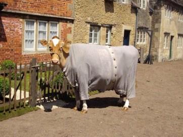 Cow-in-Pyjamas-(5)