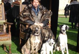 Stunt-dogs-film-and-Tv-portfolios-18