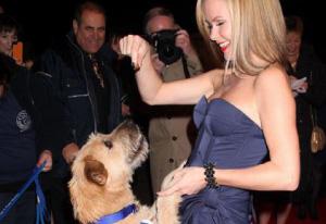 Stunt-dogs-film-and-Tv-portfolios-19