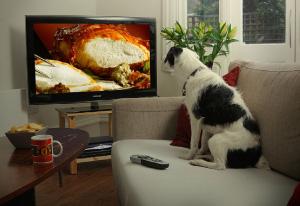 Stunt-dogs-film-and-Tv-portfolios-22
