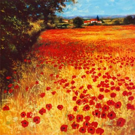 Steve Thoms - Field of Red and Gold - nonprints.com