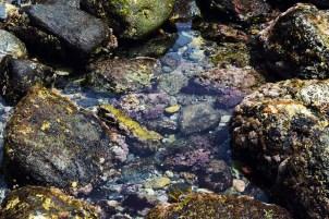 lowtide-tide-pool-dp