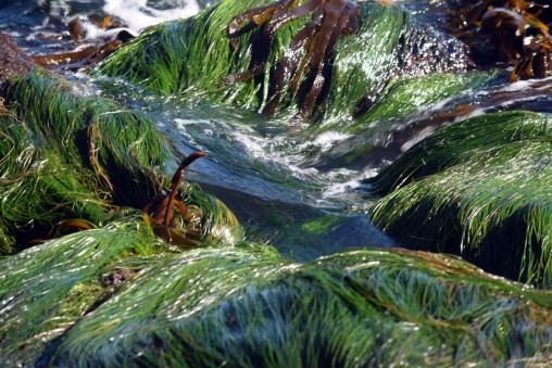 seagrass-pond-dp