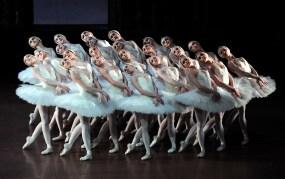 """Japan-Gastspiel, """"Schwanensee"""": ... und mit Schwänen., Foto: Stuttgarter Ballett"""