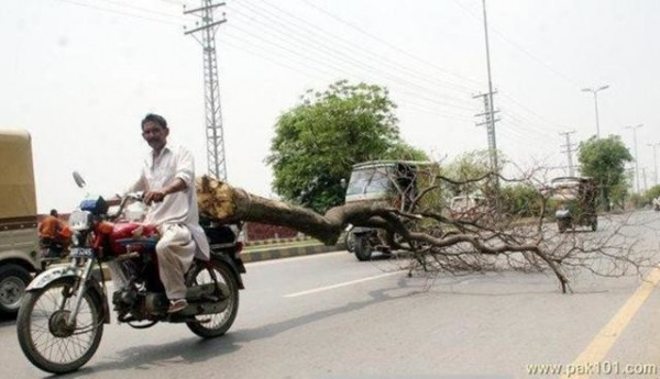 tree on bike
