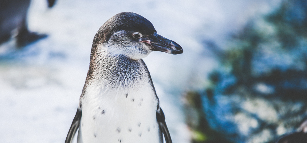 dublin-zoo