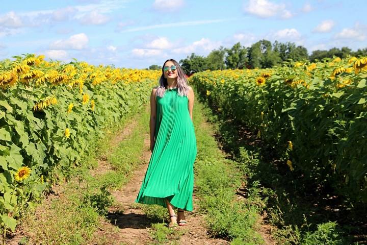 bogle-seeds-sunflower-field-toronto-ontario-13