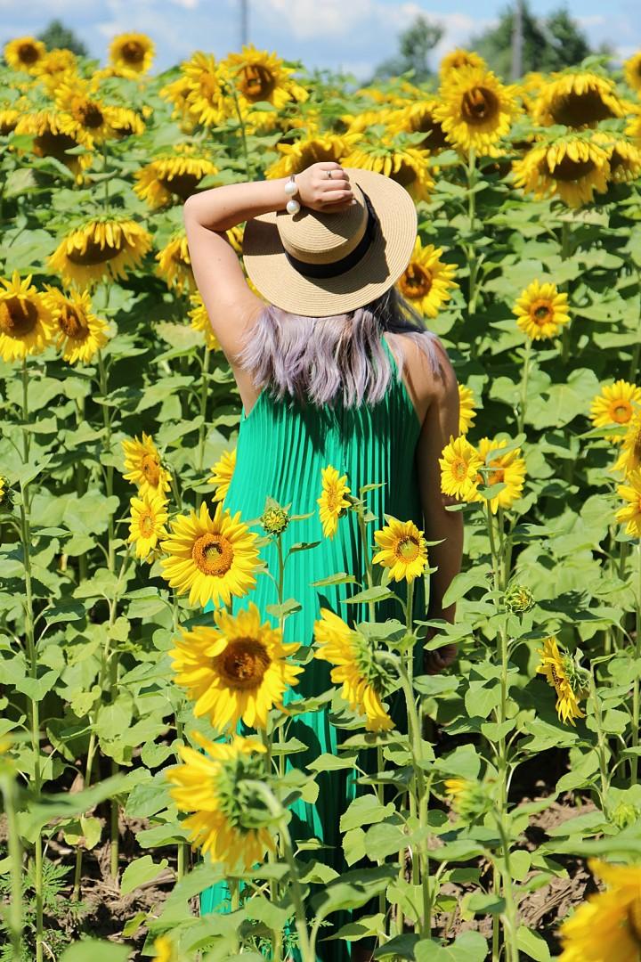 bogle-seeds-sunflower-field-toronto-ontario-23