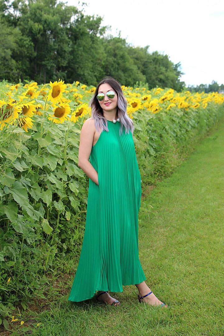bogle-seeds-sunflower-field-toronto-ontario-38
