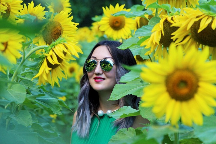 bogle-seeds-sunflower-field-toronto-ontario
