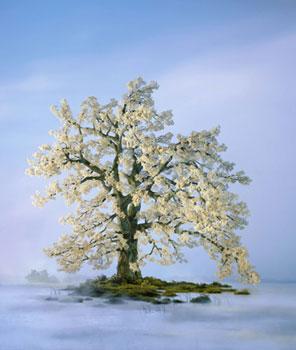 Didier Massard Spring Tree Photo