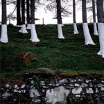 ARTmonday: Zander Olsen's Tree, Line