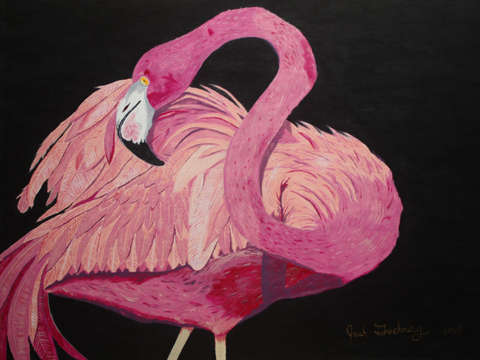 Flamingo By Josh Goehring