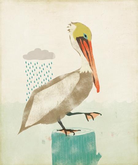 pelican-amy-sullivan