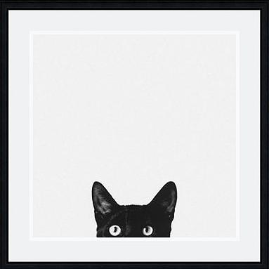 black-and-white-cat-photo