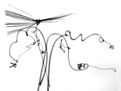 albert-koetsier-xray-photo-dragonfly