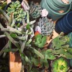 Sunday Bouquet: Succulents at West Elm