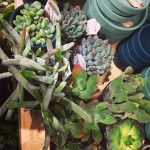 Sunday Bouquet: Succulents at West Elm