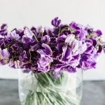 Sunday Bouquet: Violet Sweet Peas in Clear Glass