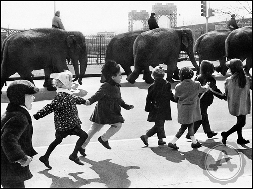 archivast-circus-elephants-kids