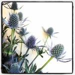 Sunday Bouquet: Thistle