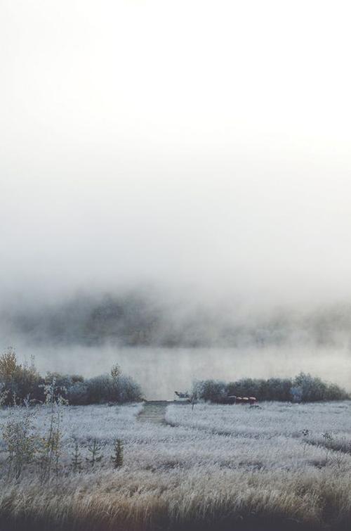 mist-frosty-mornings-tasha-marie