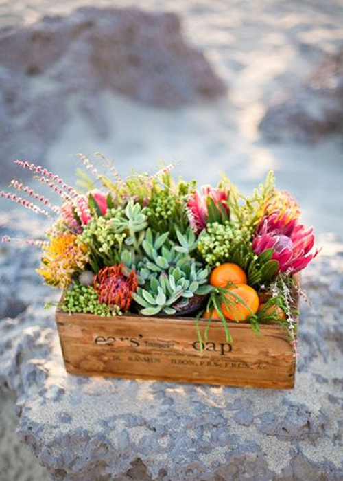 succulents-and-citrus-in-crate