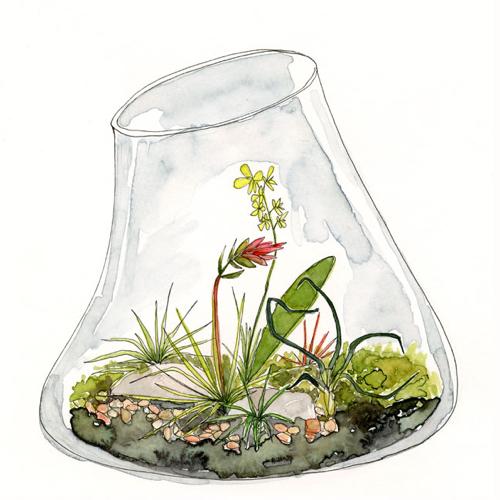 lingsay-gardner-terrarium-2