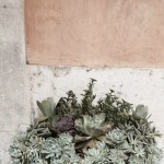 Sunday Bouquet: Succulents Against Concrete