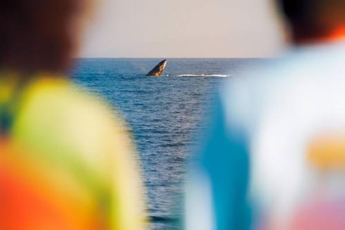 whale-matt-springer