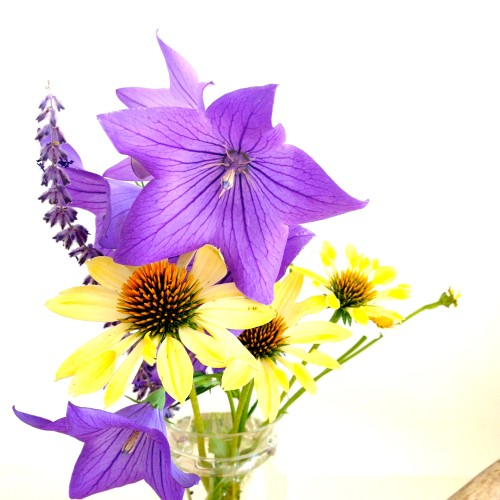 Purple And Yellow Flowers From Cape Cod Garden