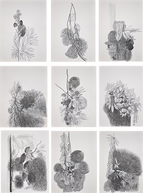 Indian Artist Kishore Kumar Pen & Ink Drawings Of Flowers