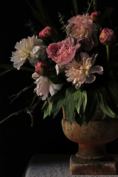 Patch NYC Flower Photo Inspired By Dutch Still LIfe Paintings