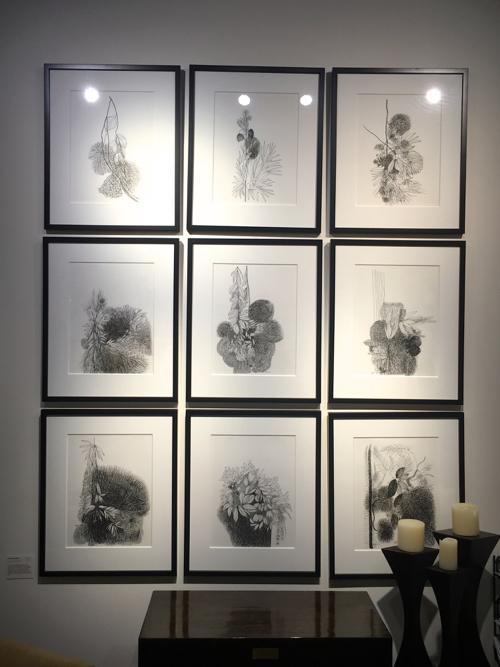 Pen & Ink Botanicals By Indian Artist Kishore Kumar